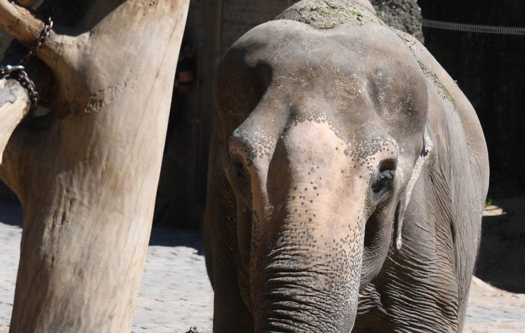 Elefante. Foto: AFP