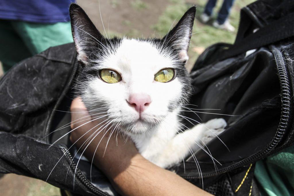 Gatos. Foto: Cuartoscuroi