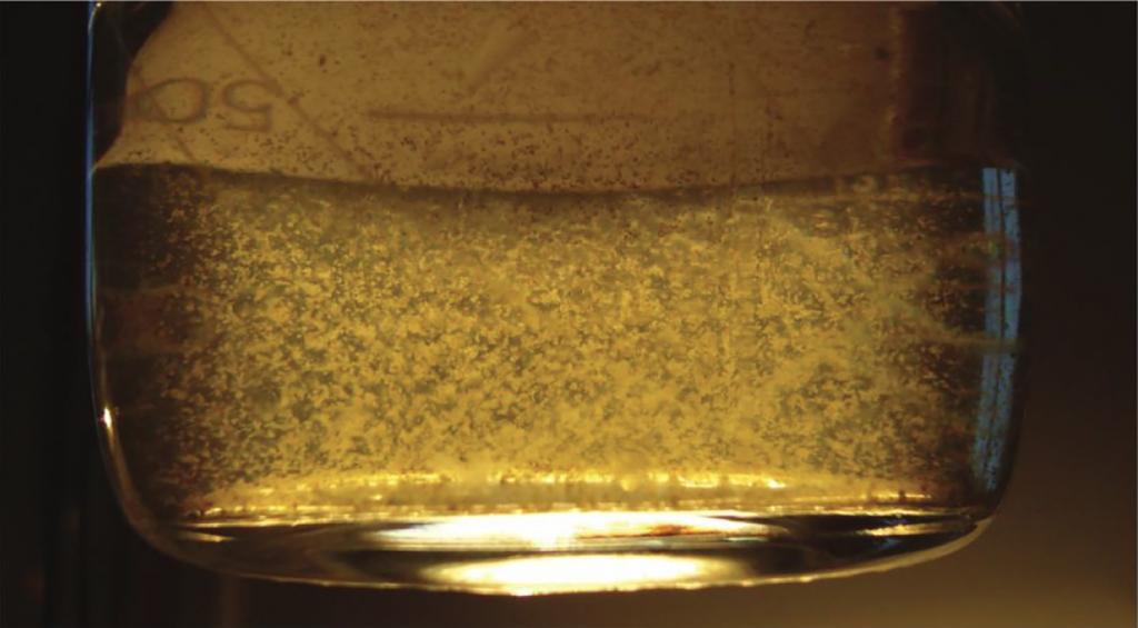 Científicos chilenos logran producir biodiesel a partir de microalgas