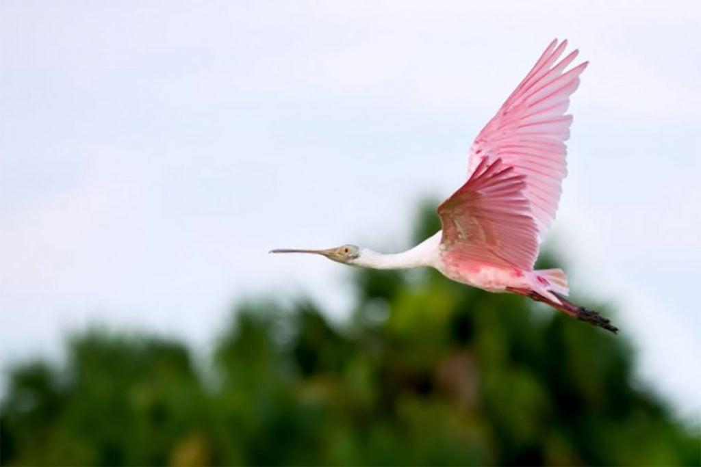FOTO: GO VISIT COSTA RICA