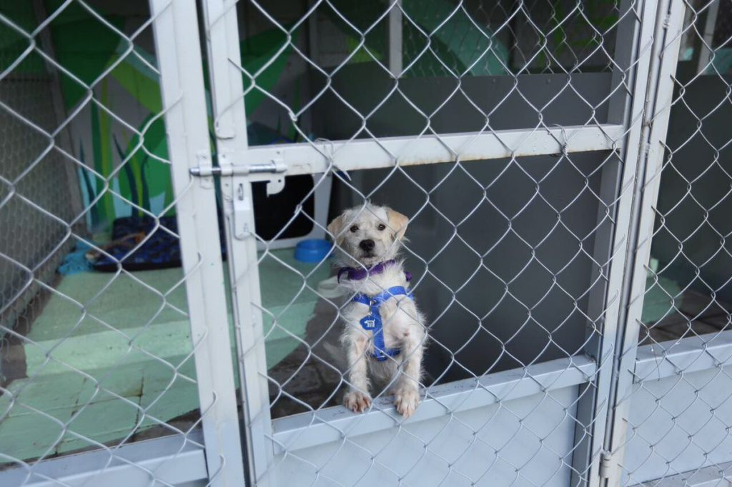 Perro en adopción. Foto: @MetroCDMX