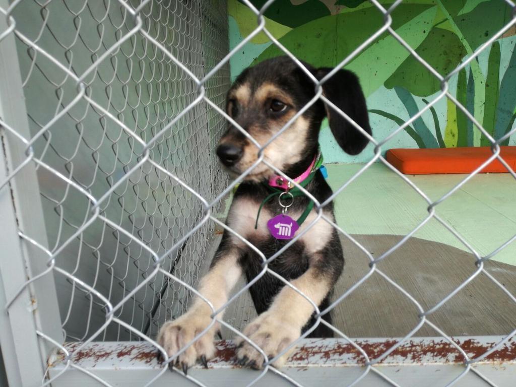 Abre Metro centro de refugio para perros rescatados en sus instalaciones