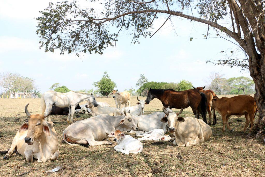 La falta de lluvias provoca que en el campo ganadero haya sequía. @Cuartoscuro.com