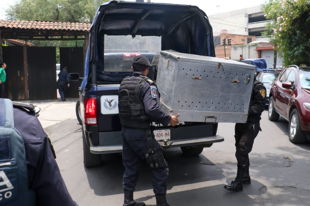 Elementos policíacos resguardan a los perros para llevarlos a la Unidad Canina. FOTO: SAÚL LÓPEZ /CUARTOSCURO