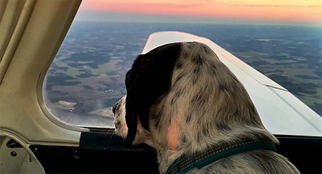 FOTO: Flying Fur Animal Rescue