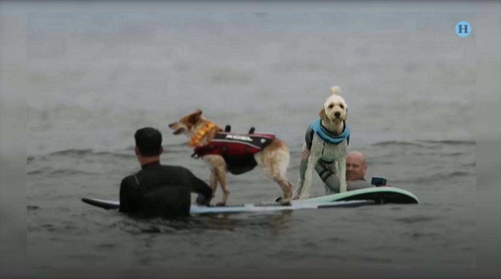 Celebran segundo campeonato mundial de perros surferos