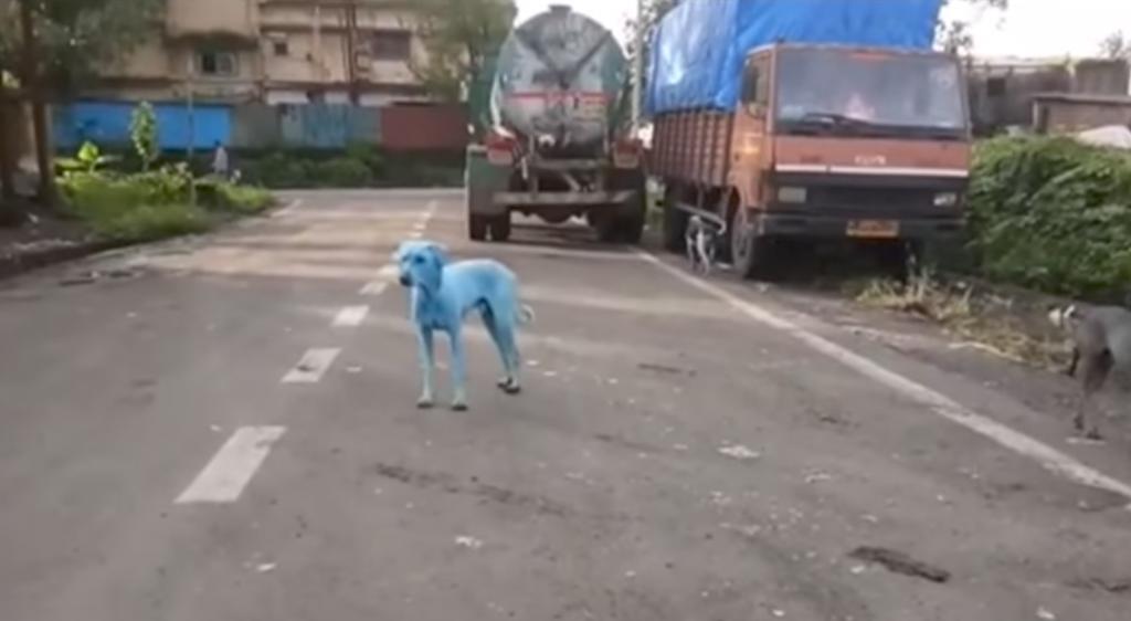 Perros azules aparecen en India por contaminación de río