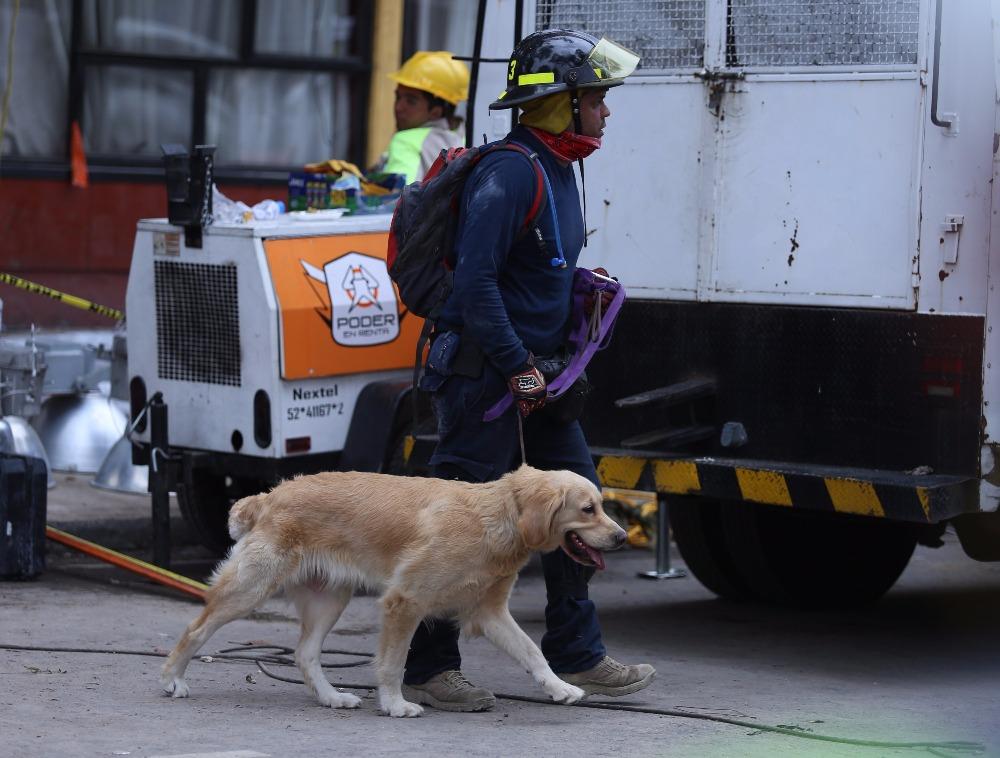 Rescate animal tras el sismo. Las mascotas son vitales en la tragedia