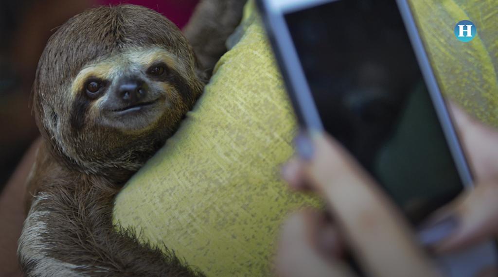 Selfies con animales salvajes, otra forma de crueldad y maltrato