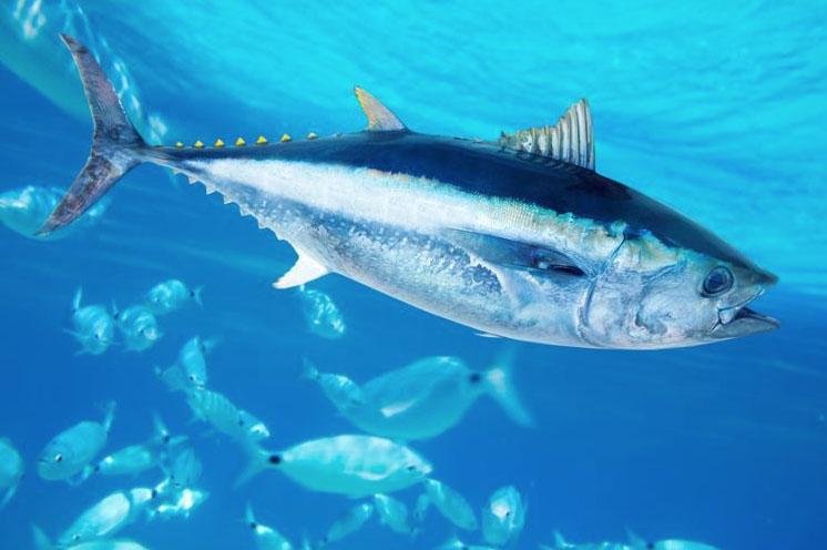 México apelará fallo de la OMC sobre el comercio del atún
