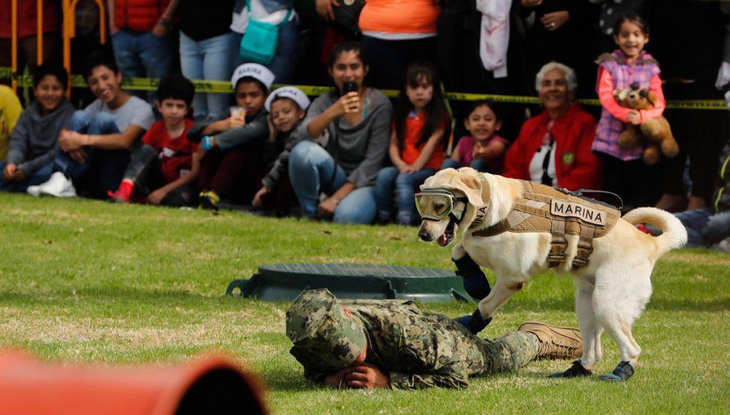 La perra labrador se ha convertido en una estrella de la Marina, que aprovecha su popularidad y la solidaridad tras los sismos para acercarse a la gente.