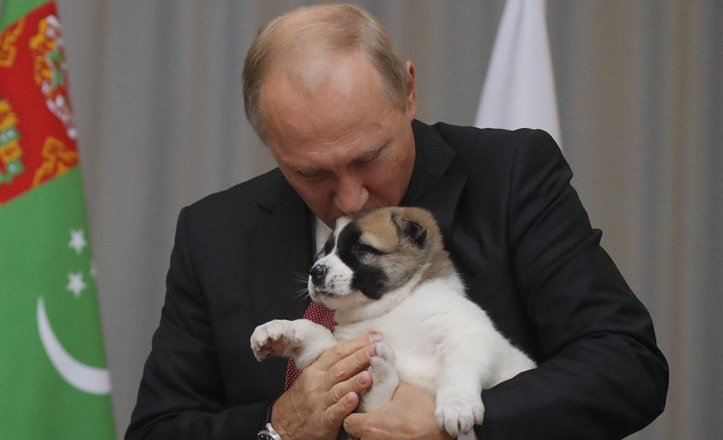 El presidente ruso Vladimir Putin no pudo ocultar su amor por los perros al recibir un cachorro de raza alabay como regalo de cumpleaños.