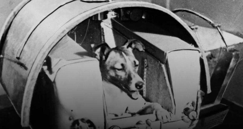Se cumplen 60 años del viaje al espacio de Laika