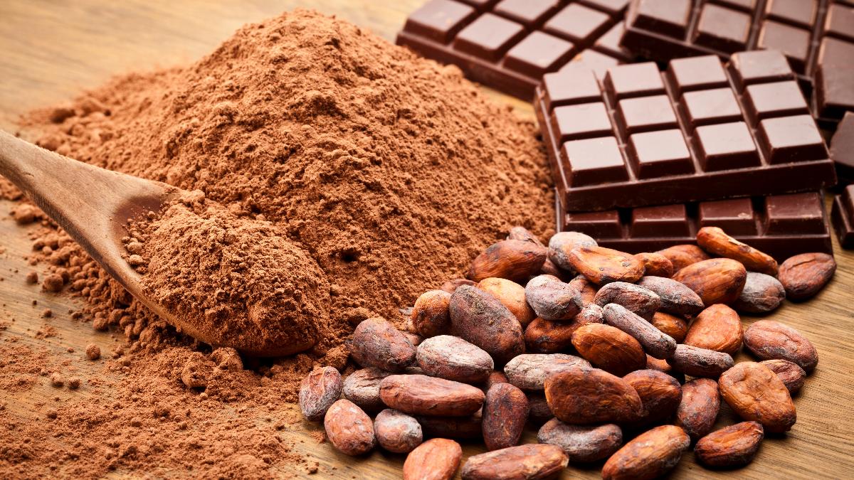Resultado de imagen para cacao