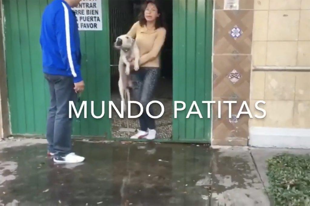 Facebook Mundo Patitas