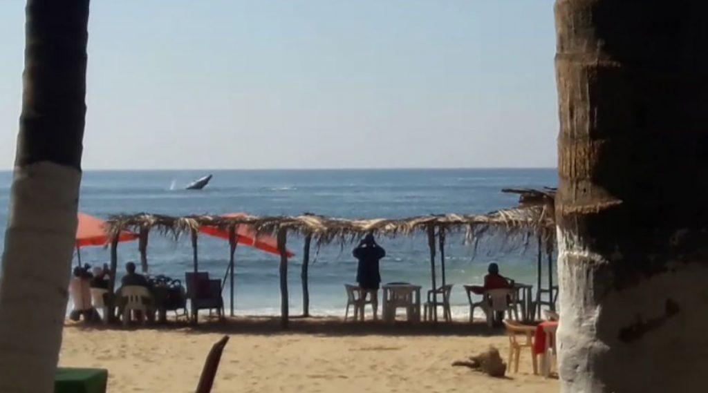 Al menos dos ballenas aparecieron en la playa de Pie de la Cuesta brindando un espectáculo a los turistas que se encontraban en la franja de arena