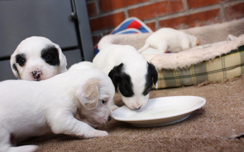 Adopta un perrito, en la renovada Glorieta de los Insurgentes