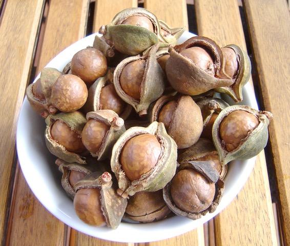 #JuevesInternacional: 11 datos que no sabías de las nueces de macadamia