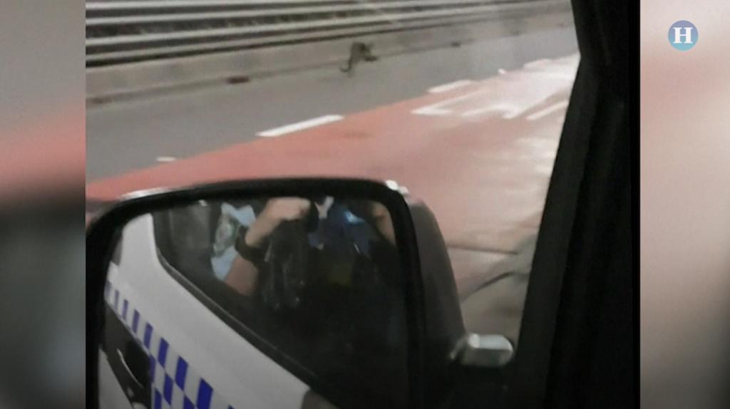 Ualabí sorprende a conductores en Sídney