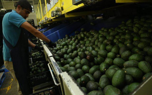 Los productos alimentarios mexicanos son los más demandados FOTO: CUARTOSCURO