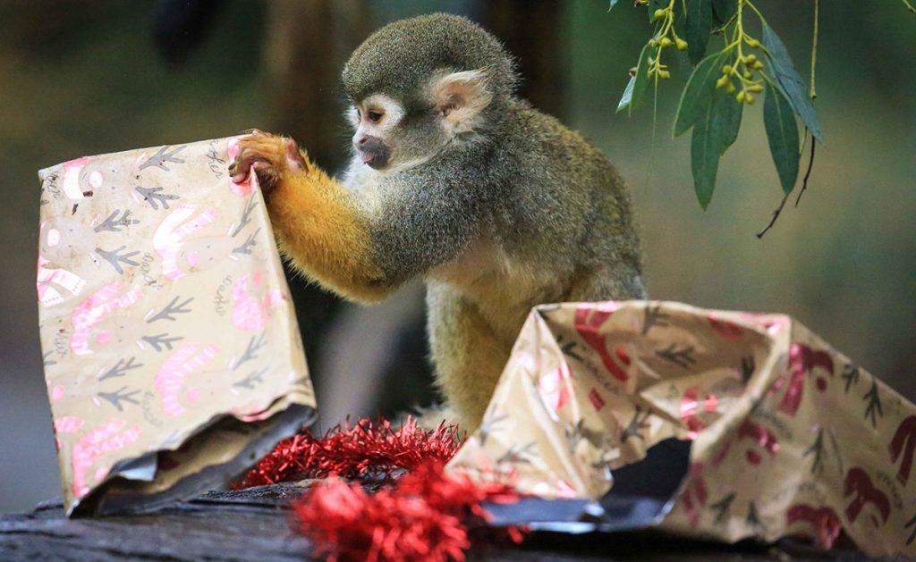 Trece monos murieron calcinados al incendiarse su enclaustro en el parque Safari de Woburn, 80 kilómetros al norte de Londres