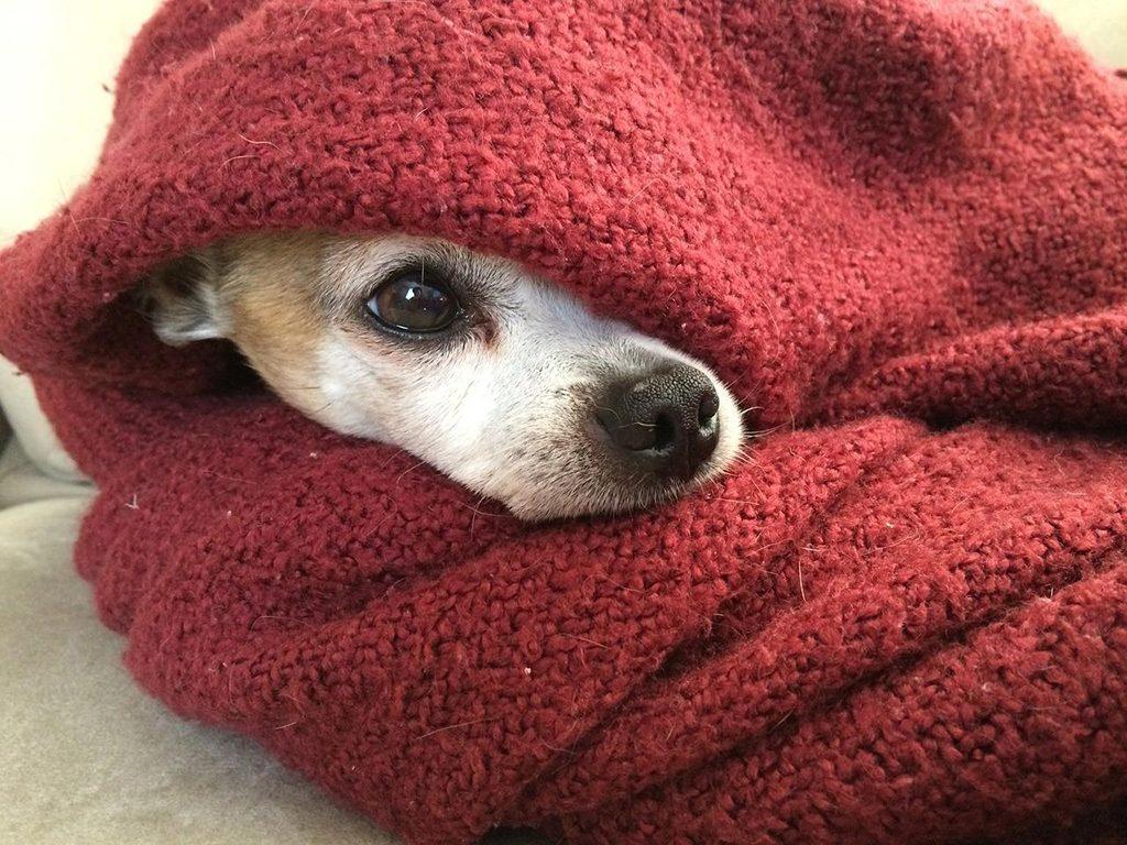 El ABC para cuidar a tu perrito en temporada de frío