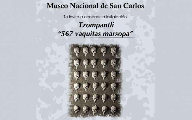 """La obra """"Tzompantli, 567 vaquitas marsopa"""", del artista Patricio Robles Gil se exhibe en el Museo de San Carlos para honrar al mamífero en peligro de extinción"""