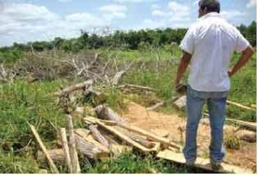 Devora tala hábitat del jaguar