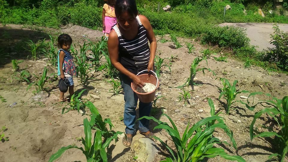 Gobierno de Guerrero entrega fertilizantes gratuitos para 81 municipios