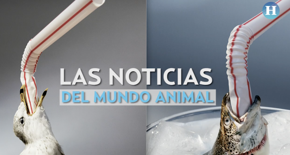 Las noticias del reino animal
