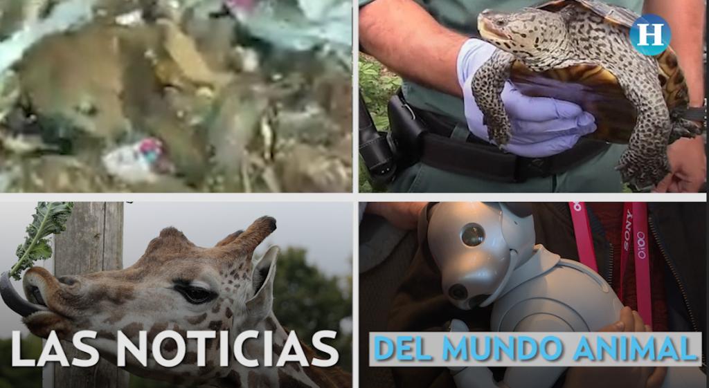 Las noticias del mundo animal