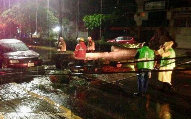 #Video: Fuertes lluvias tumban árboles e inundan calles de Oaxaca