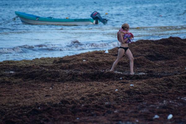 Los turistas se alejan de las playas. Los tres niveles de gobierno han puesto en marcha programas para la limpia de esta alga marina flotante, sin embargo no se han obtenido resultados importantes, ya que el sargazo no deja de salir. FOTO: CAURTOSCURO