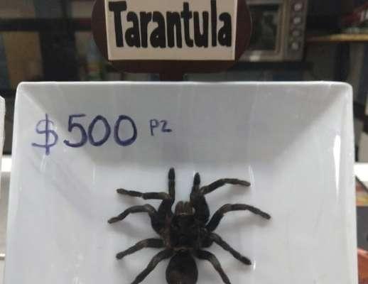 Se acaba negocio de tacos de tarántula en mercado de San Juan; decomisan ejemplares