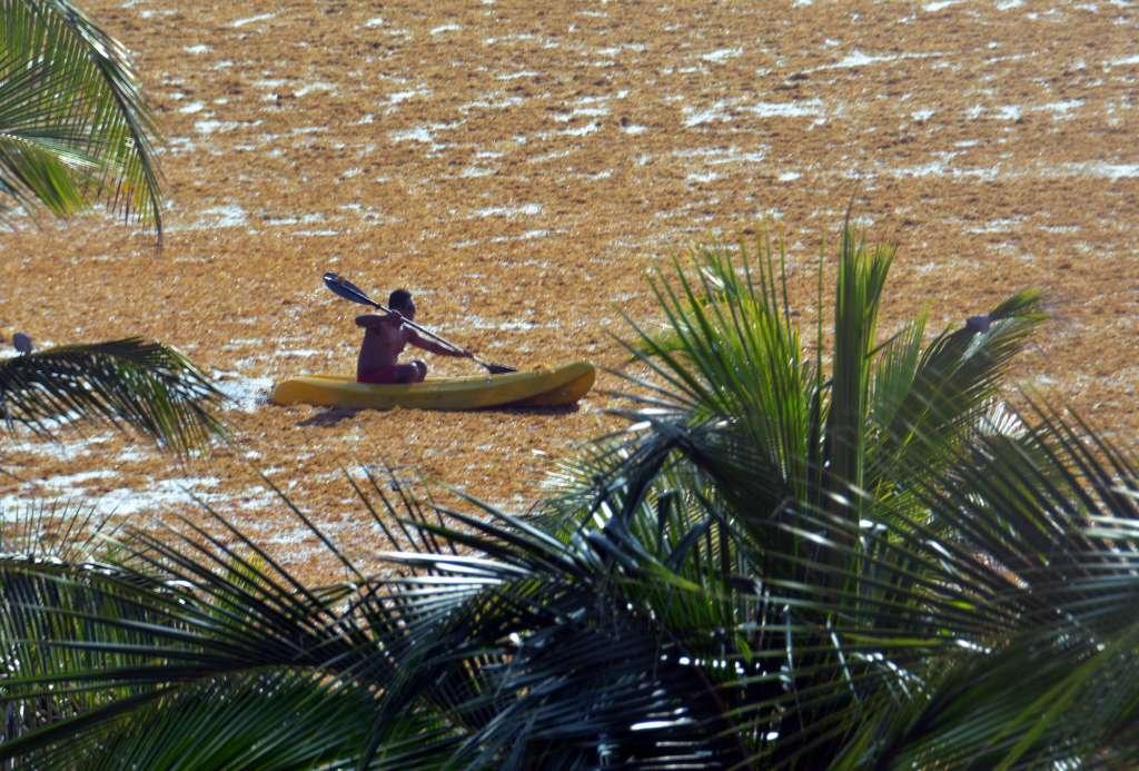 El sargazo ha llegado de forma masiva este año. FOTO: ARCHIVO/ CUARTOSCURO