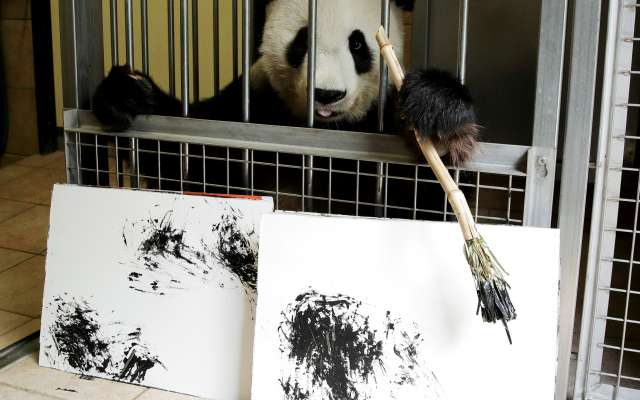 Las pinturas de la osa son en blanco y negro, como el pelaje característico de esta especie. Foto: REUTERS