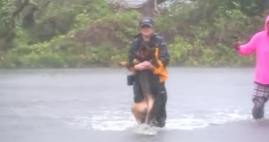 Reportera rescata a un perro e interrumpe su cobertura de Florence. Foto: ABC11