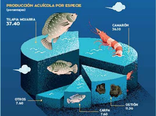 La producción de pescado y marisco alcanzó 404 mil toneladas en 2017