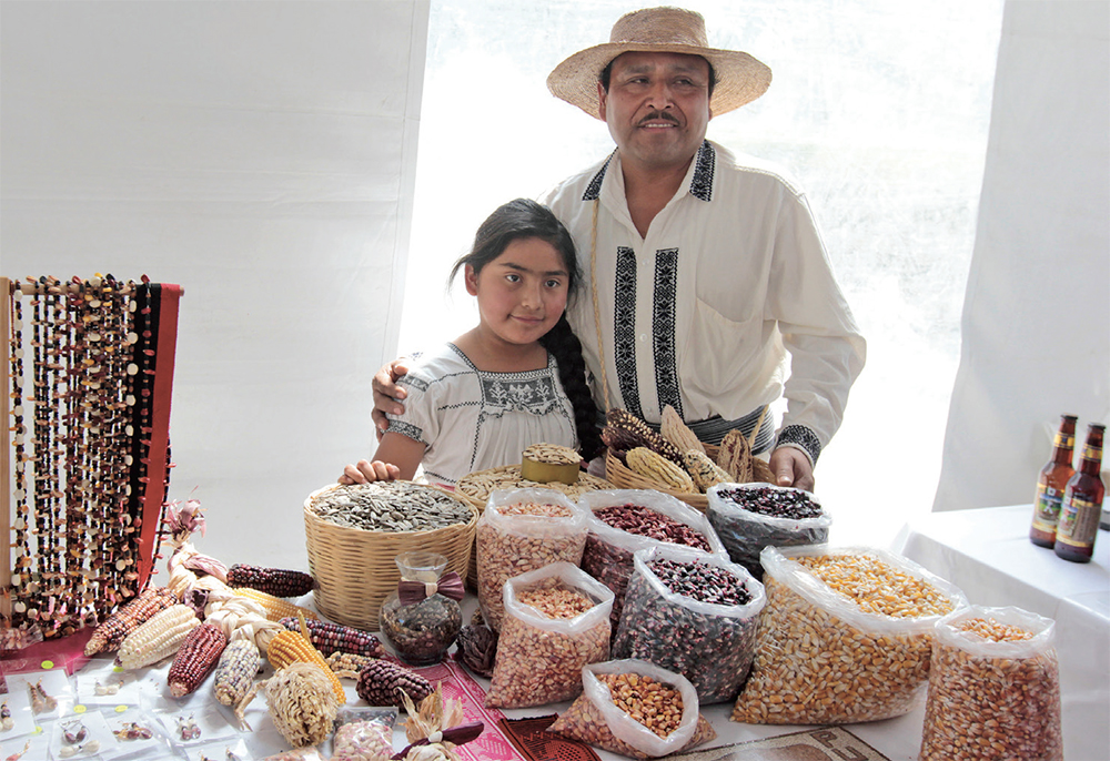 El maíz tiene una antigüedad en México de entre ocho mil y 10 mil años con 59 razas. FOTO: ENFOQUE