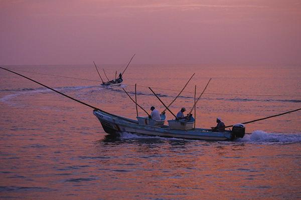 El sector pesquero en México es uno de los líderes en el mundo. FOTO: CUARTOSCURO