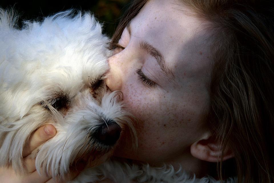 La app de hospedaje canino surgió a raíz de la desconfianza hacia las pensiones para perros y las complicaciones para encargarlo con algún familiar o amigo. Foto: Especial