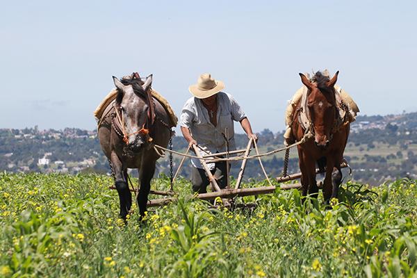 Los campesinos han comenzado a trabajar sus tierras en espera de que este año sea de buena cosecha. FOTO: CUARTOSCURO