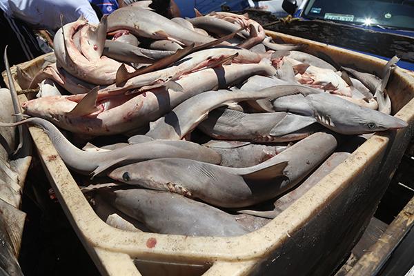 Los pescadores dijeron que la propuesta para decretar el área Reserva de la Biosfera no cuenta aún con sustento científico. FOTO: CUARTOSCURO