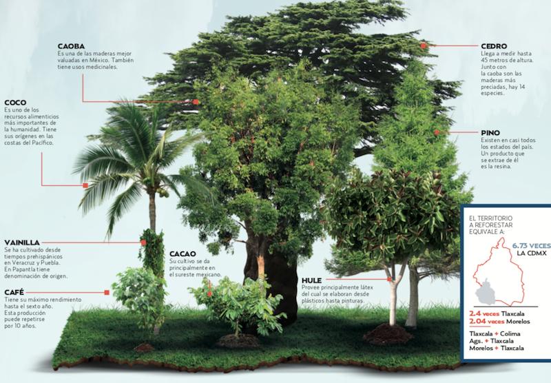 Listo, plan de reforestación.  Gráfico: Sandra Romo / Heraldo de México