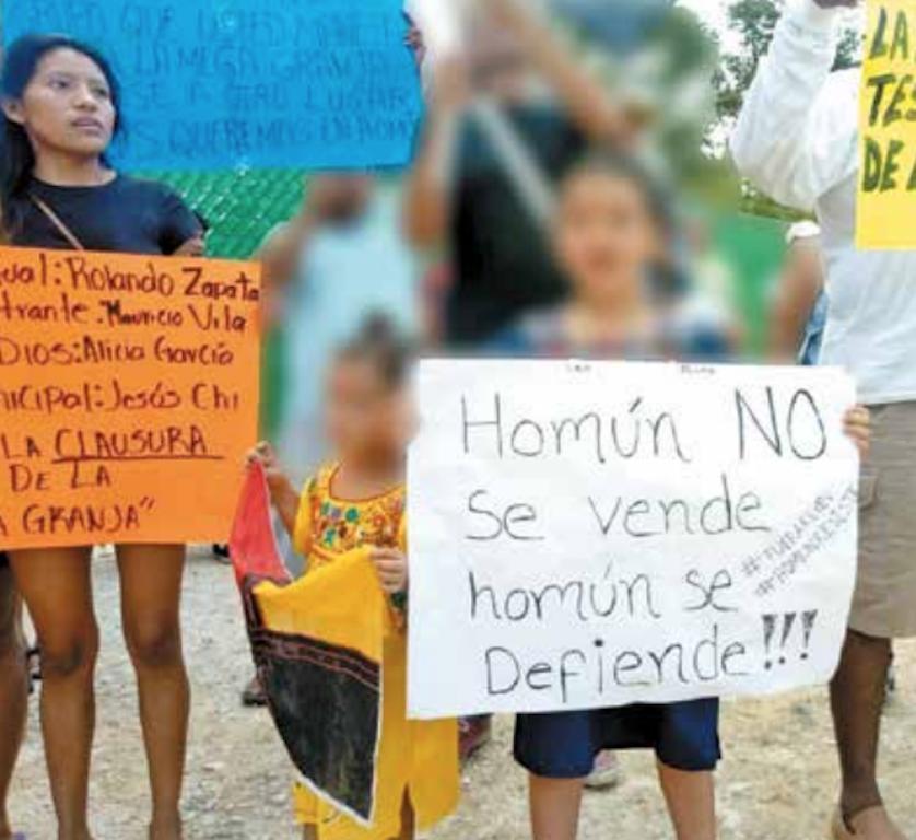 Mayas de Homún logran suspensión de megagranja porcícola