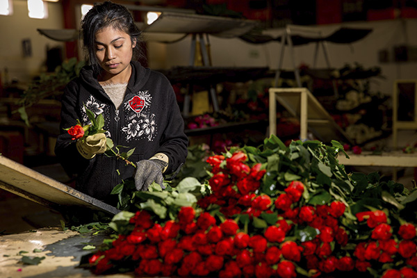 El valor de las importaciones de mercancías se ubicó en 37 mil 999 millones de dólares. FOTO: CUARTOSCURO