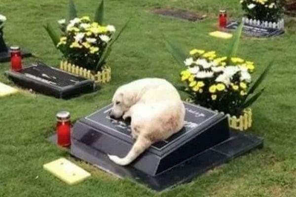 Las mascotas guardan fidelidad a sus dueños por razones ancestrales. FOTO: ESPECIAL