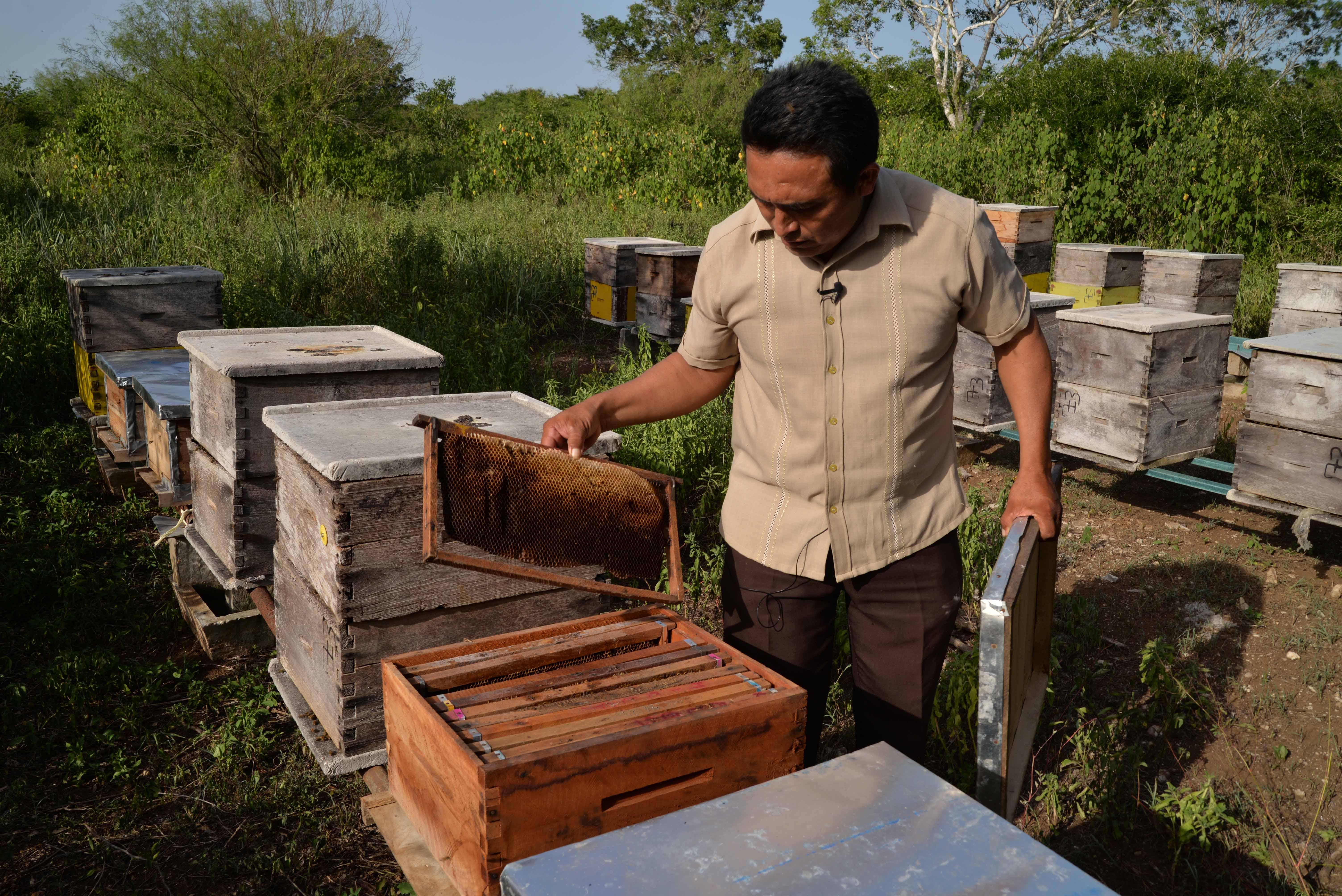 afectaciones colmena Dzonot - Delincuente Ecológico: abejas amenazadas 261018 - El Apicultor Español: Actitud y Aptitud Apícola