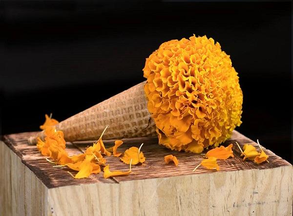 su uso evoluciona para hacer una aparición en la gastronomía de temporada. Foto: Cortesía de El Portal del Sabor