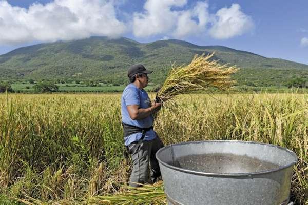 Emplear alimentos provenientes de pequeños productores garantiza beneficios. Foto: Cuartoscuro.com